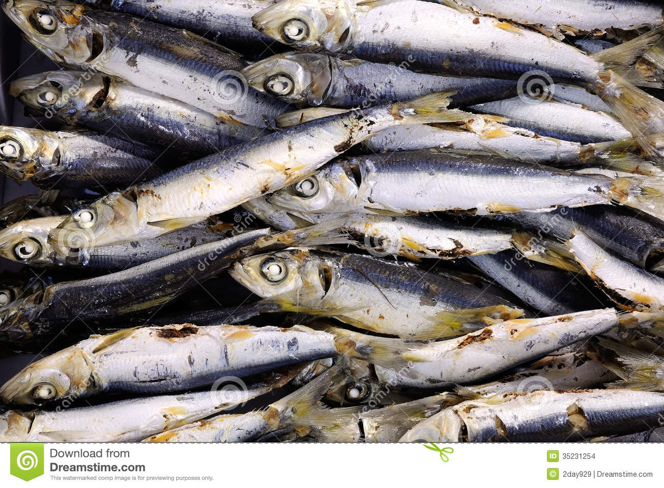 Dried fish stock photo. Image of dried, drying, preservation ... for Dried Fish Clipart  61obs