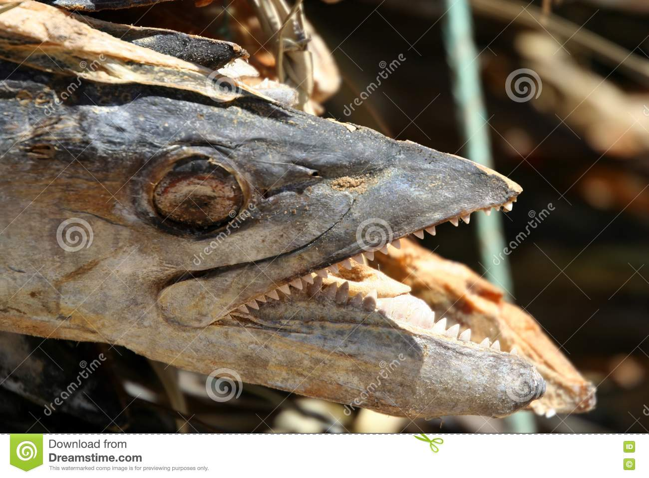 Dried fish for sale royalty free stock photos image for Stock fish for sale