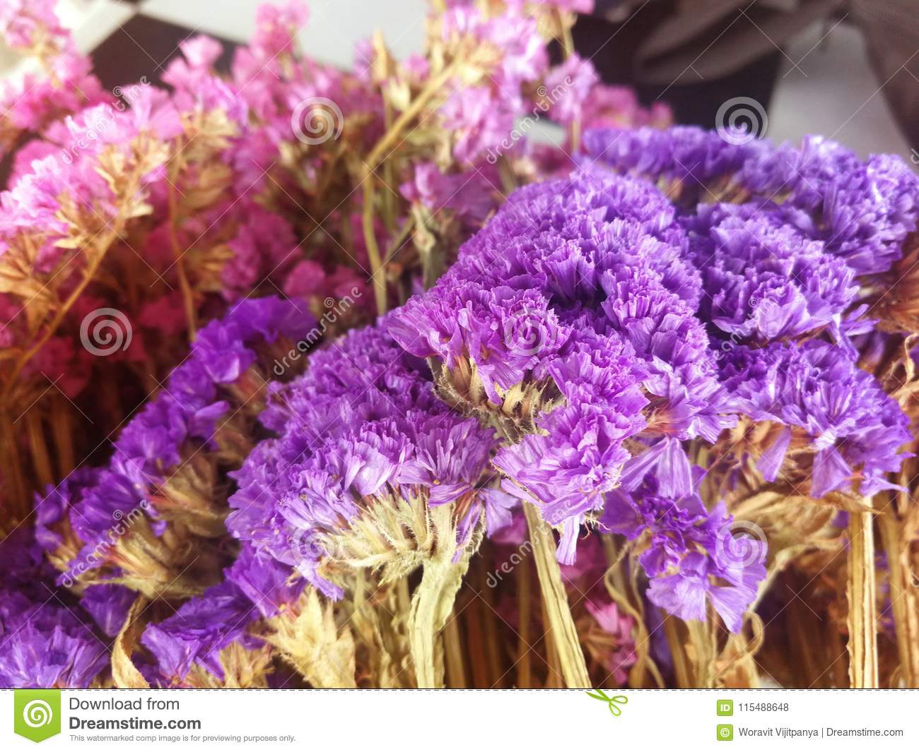 Dried Flowers Stock Photo Image Of Background Bright 115488648