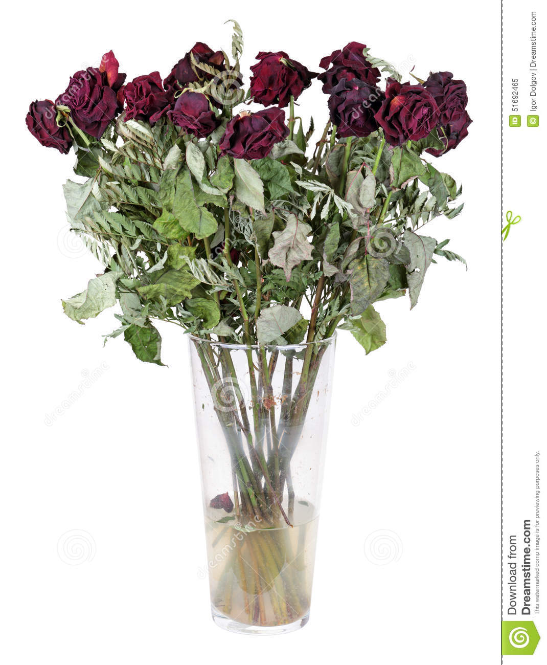 Dried flowers stock image image of burgundy decline 51692465 dried flowers reviewsmspy