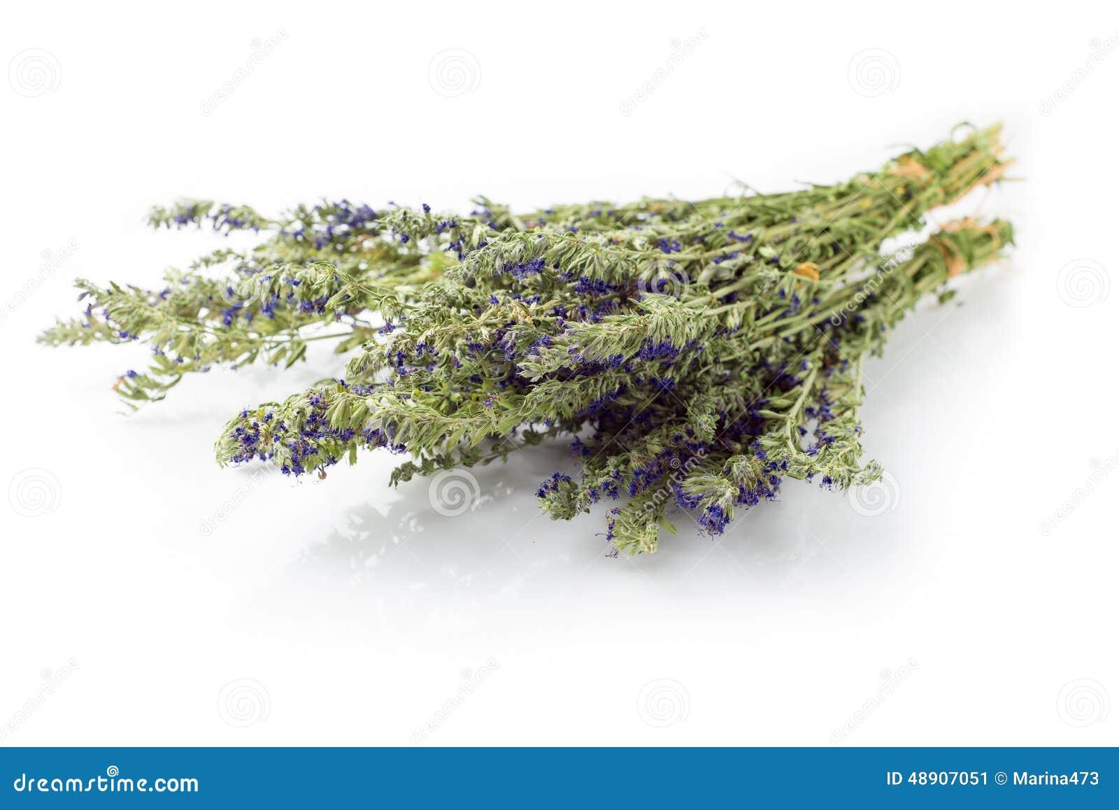 Dried hyssop twigs