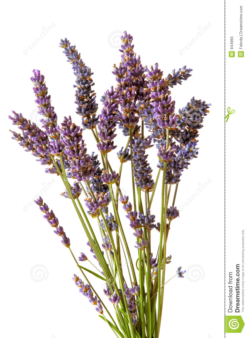 Dried Lavender Bouquet Stock Image Image Of Nature