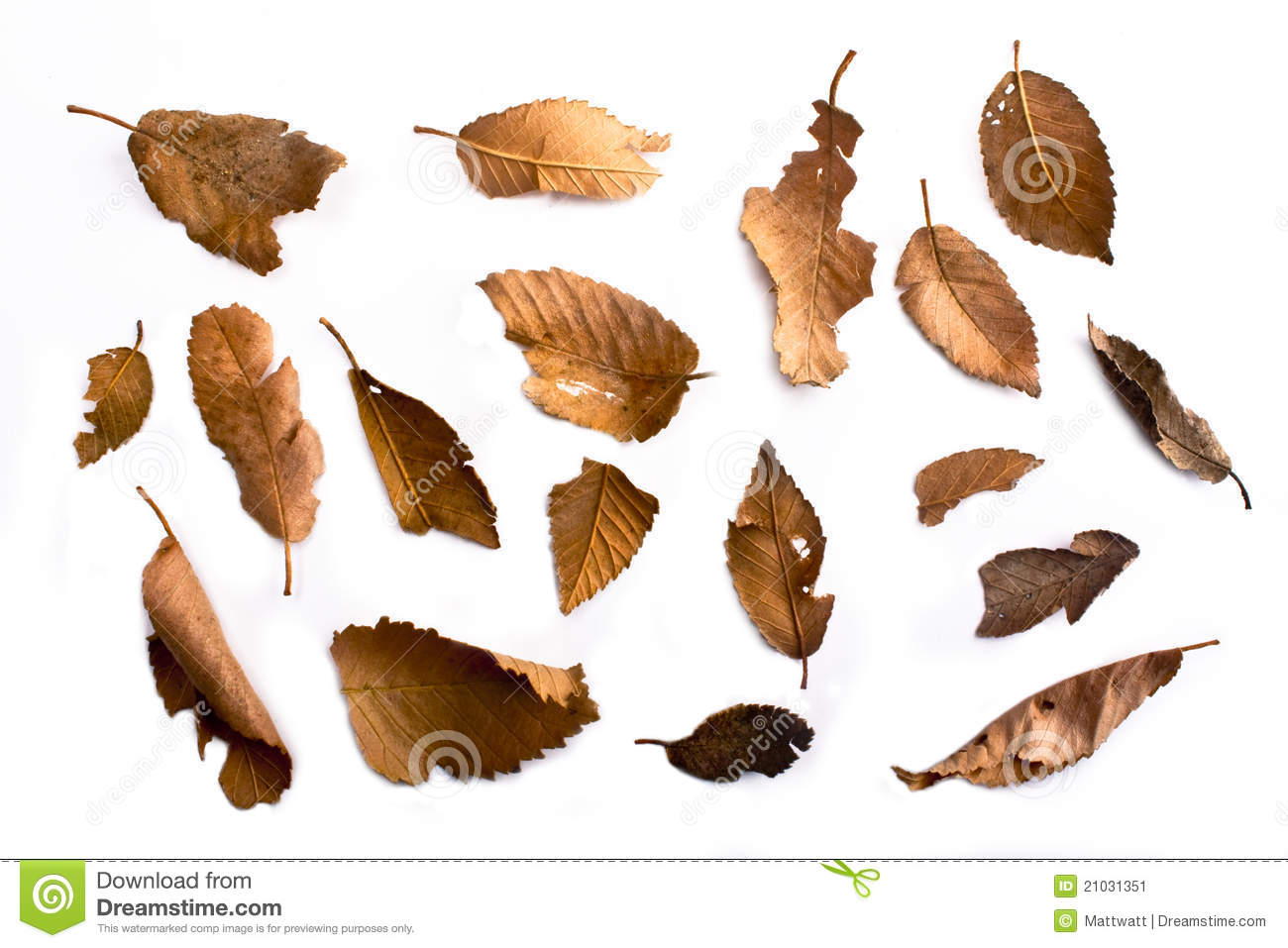 how to make dry leaves