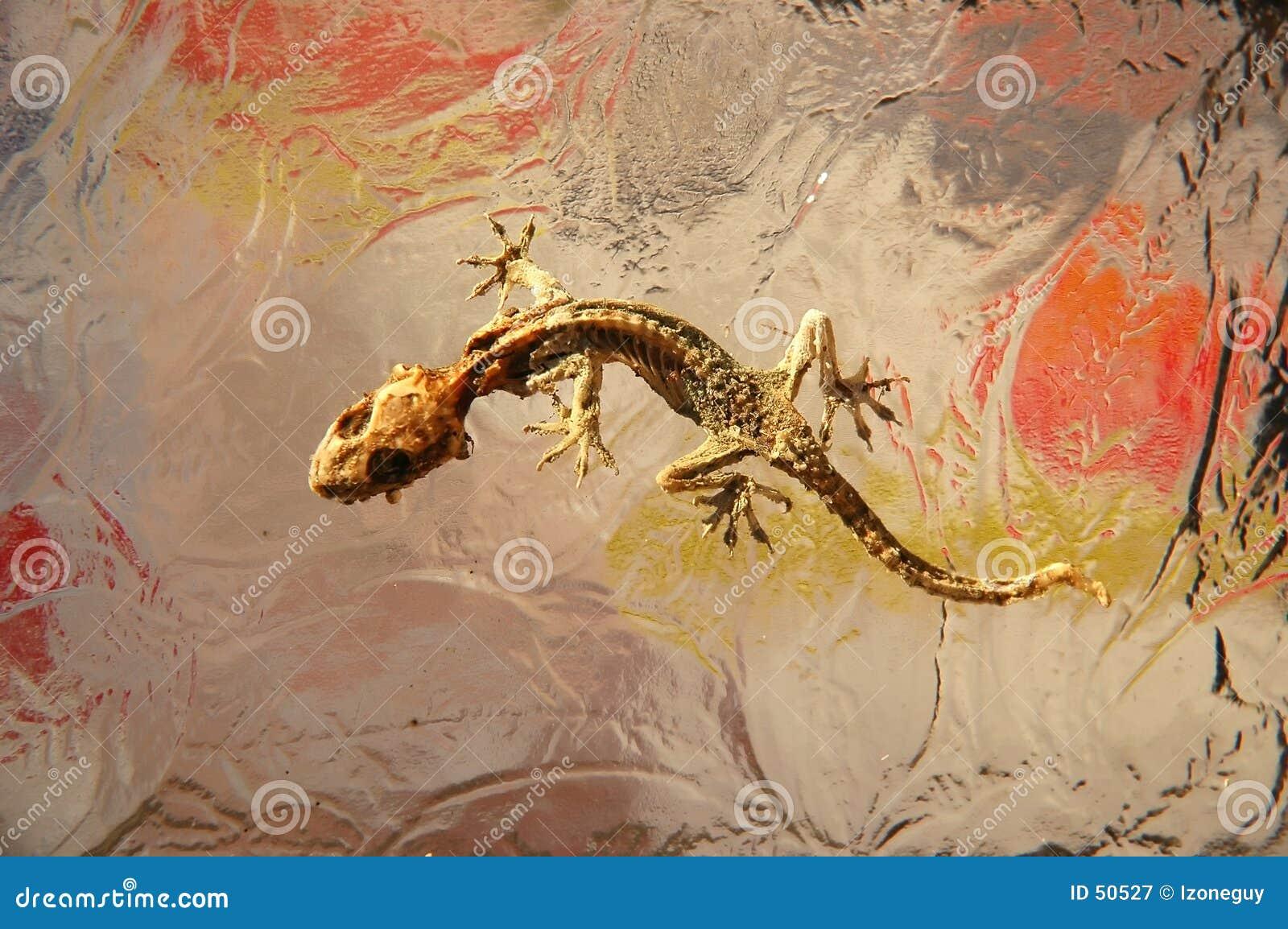 Dried Lizard on glass