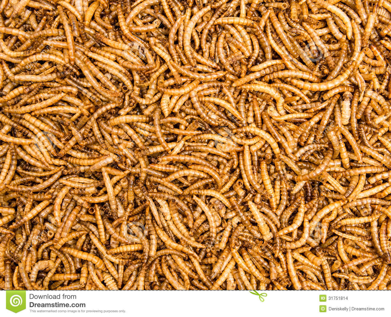 Dried mealworms background stock images image 31751814 for Mealworms for fishing