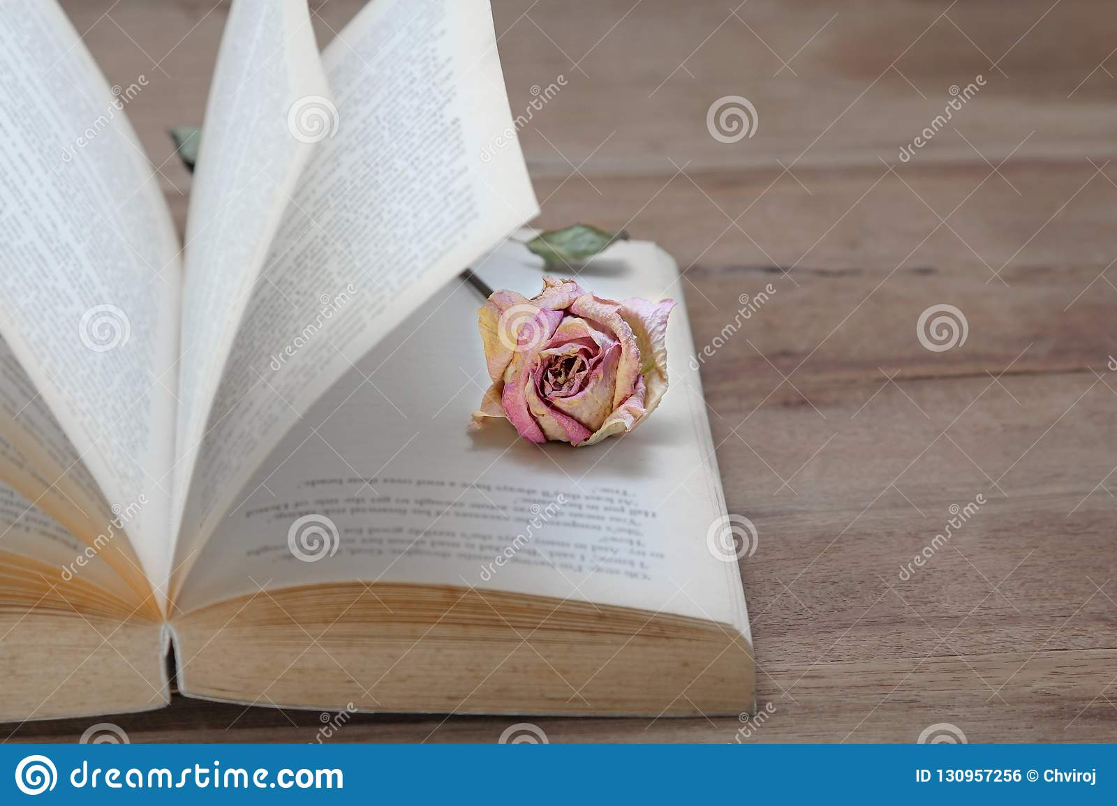 Dried pink rose on the old books open. Vintage tone.