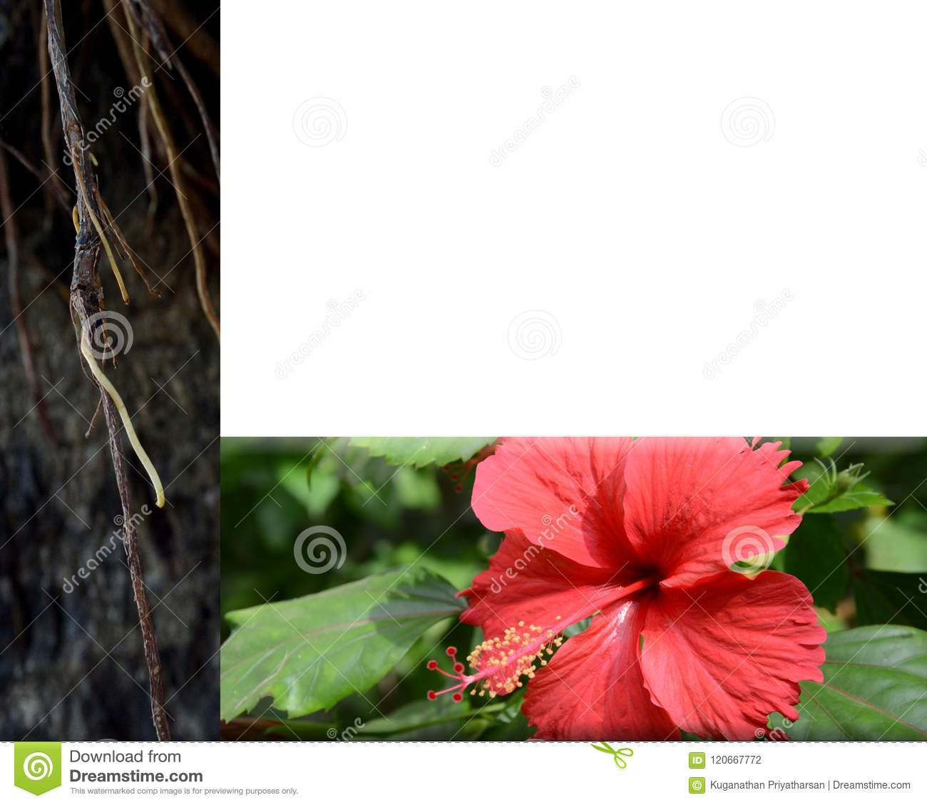 Traditional herbal hair care stock photo image of flowers product traditional herbal hair care izmirmasajfo
