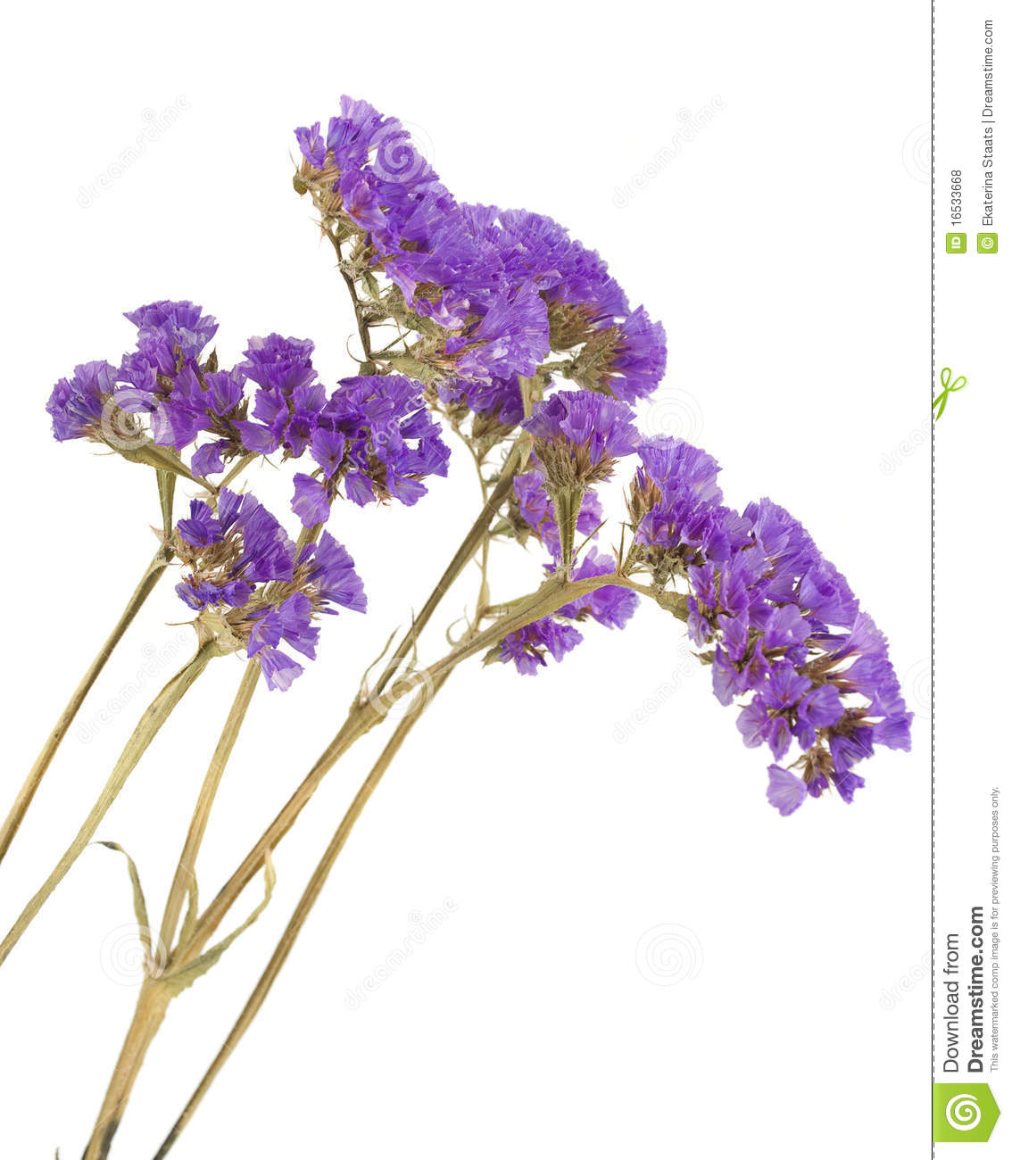 Dried Purple Flowers On The White Royalty Free Stock