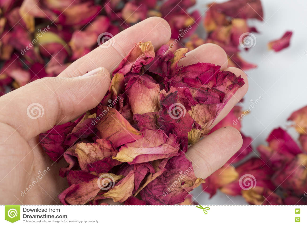 Dried rose petals stock image  Image of health, cosmetology
