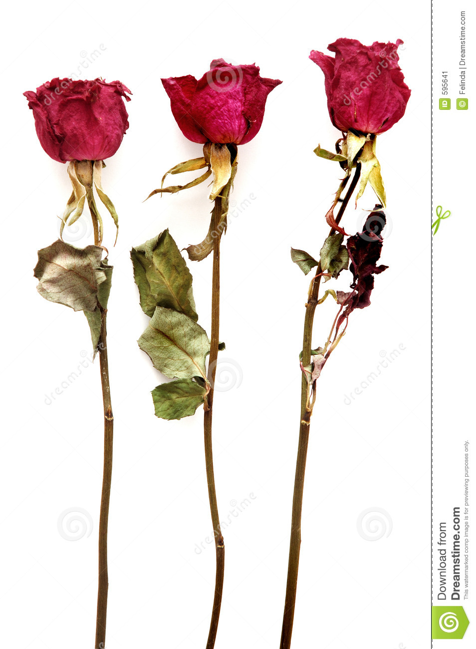 Dried Roses Stock Image Image Of Preserved Arrangement