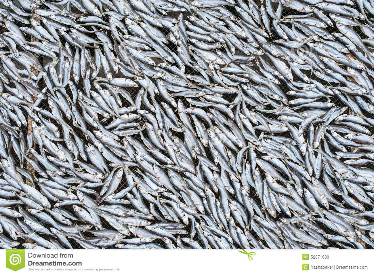 Dried small fish stock photo image 52871689 for Small fish net
