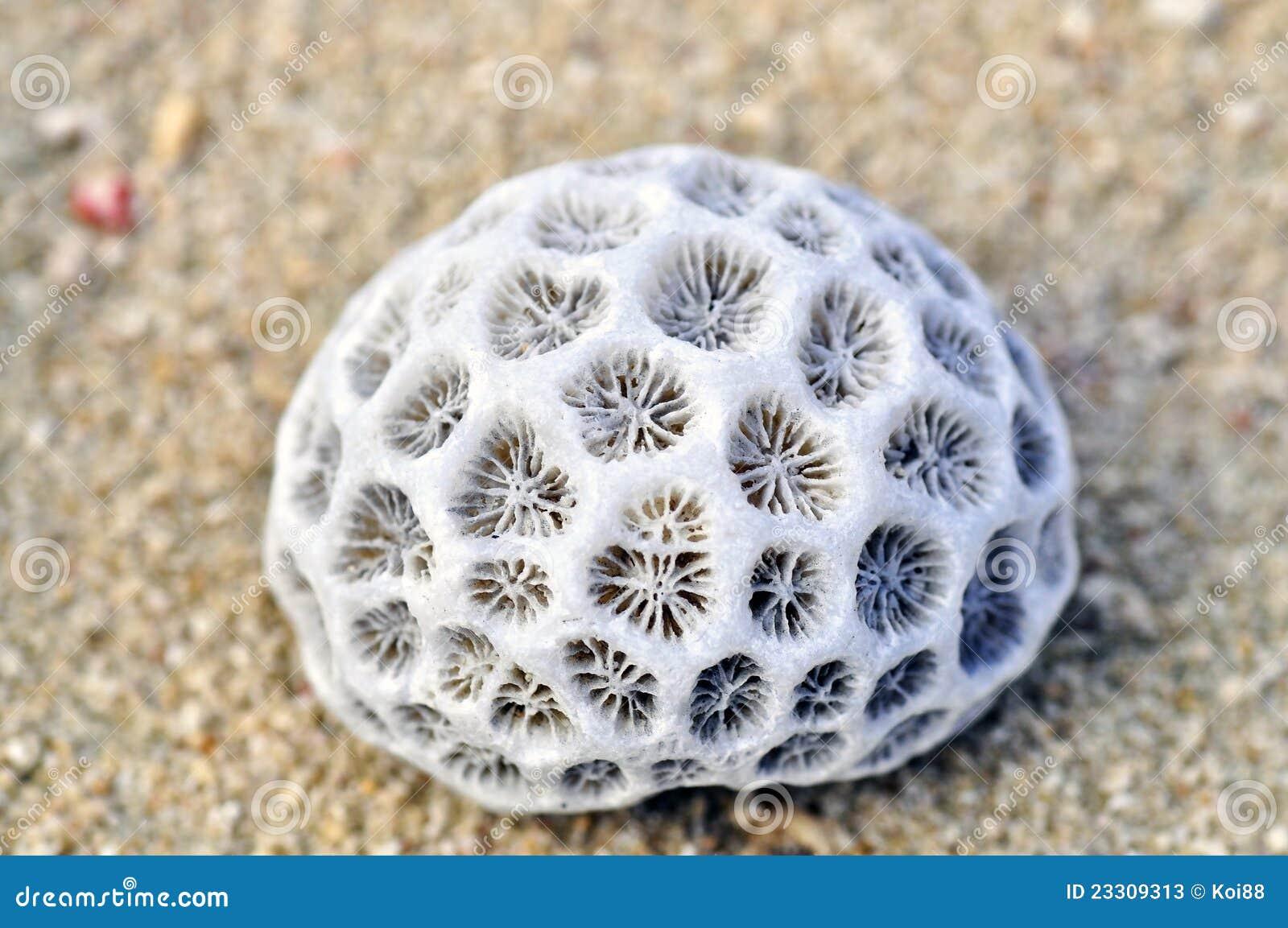 corals app