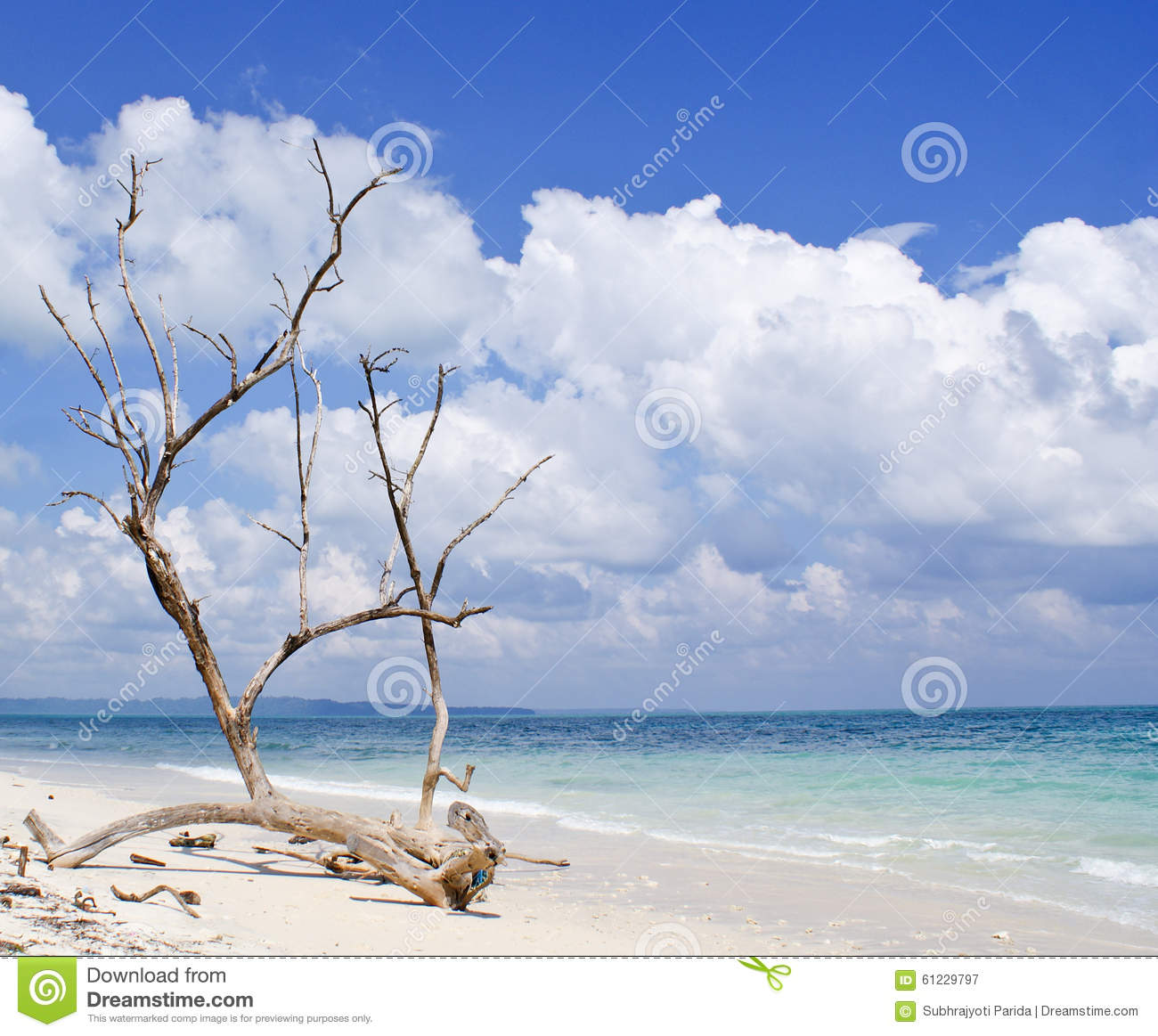 Download Dried Tree Trunk With Bare Branches On The Backdrop Of Blue Sea Stock Image - Image of backdrop, white: 61229797
