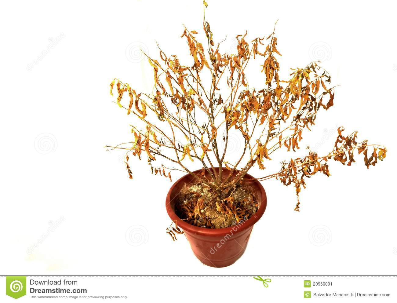 dried up potted plant stock image image 20960091 fall leaf clipart with transparent background fall leaf clipart vector