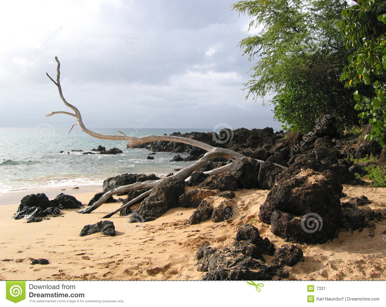 Drift Wood on Lava Rocks and Sand
