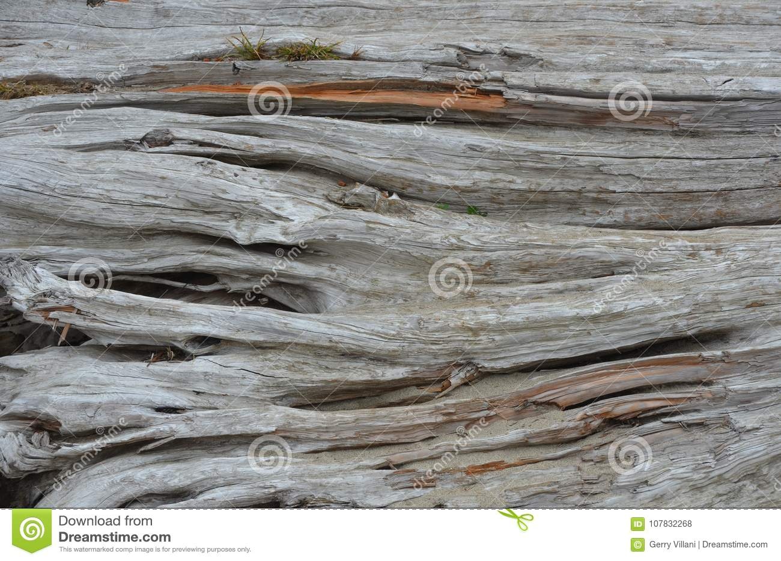 Drift wood log detail at an Oregon beach 1