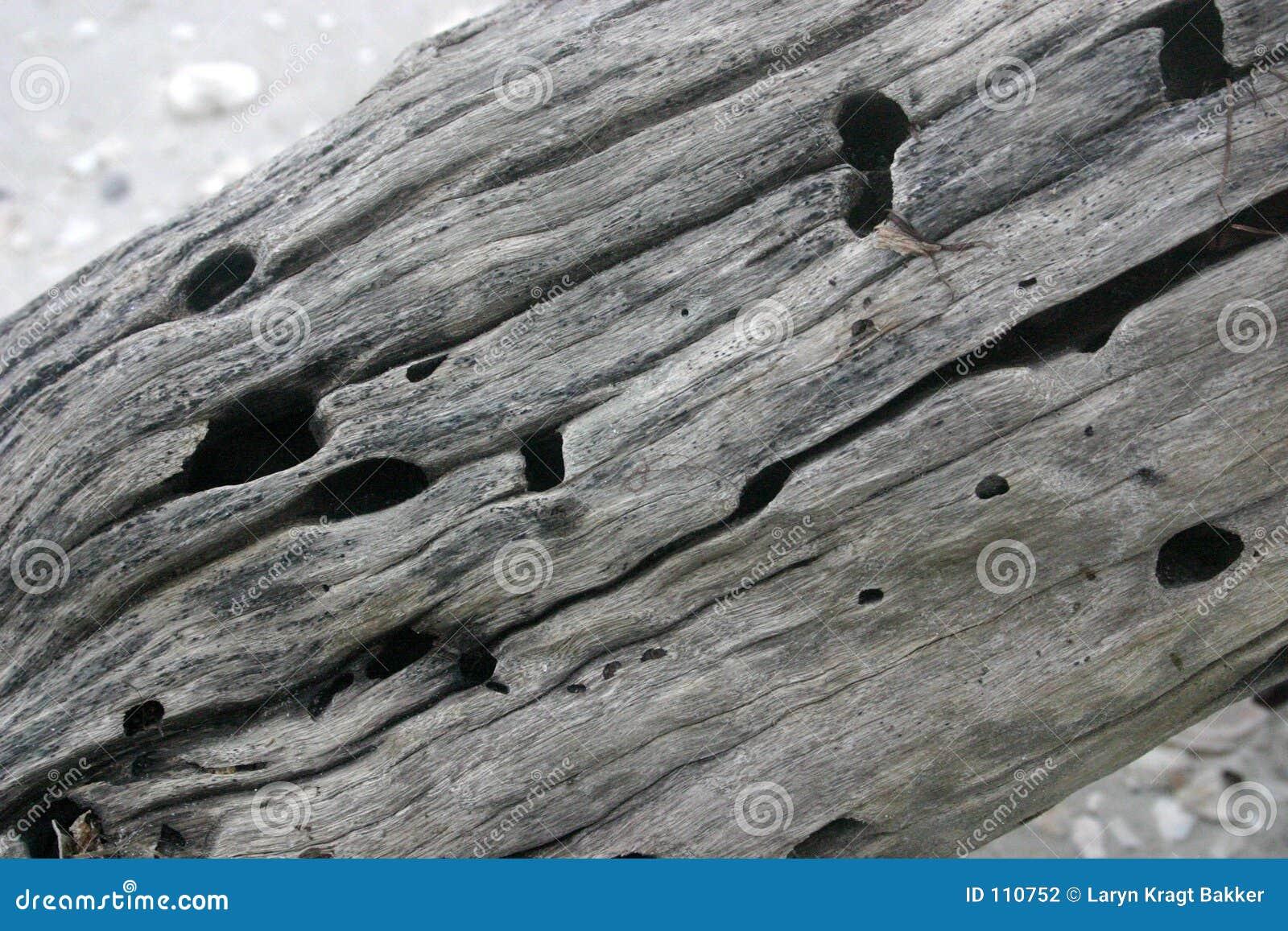 Drift wood texture