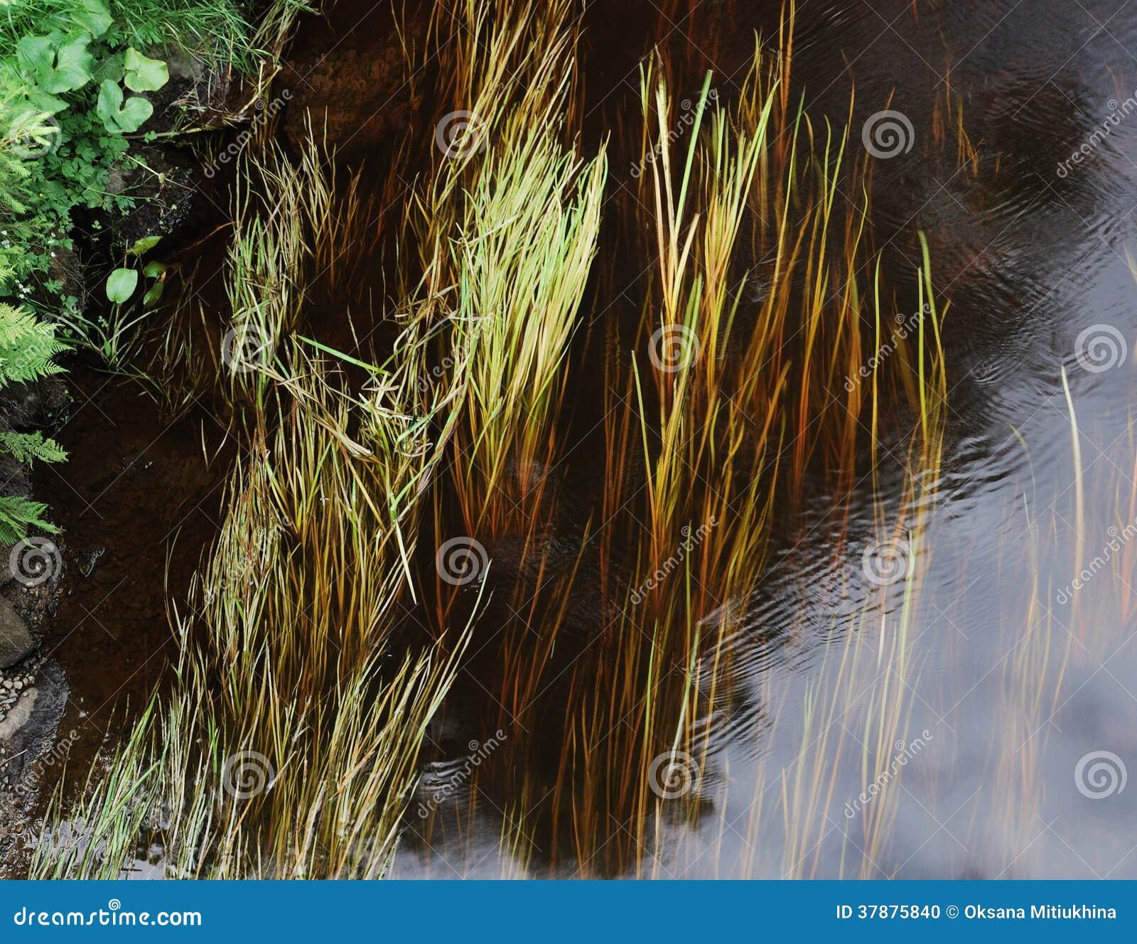 Driftweed attraverso acqua corrente