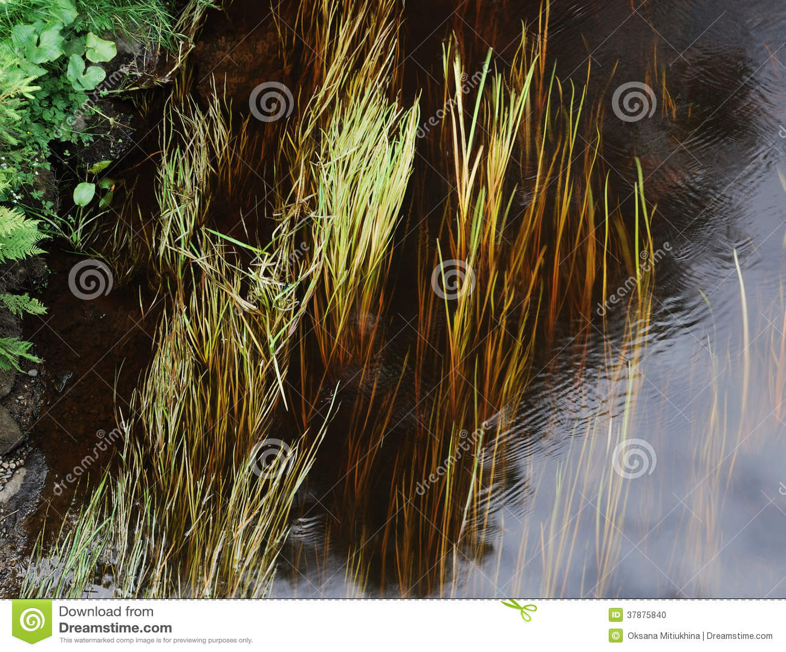 Driftweed till och med flödande vatten