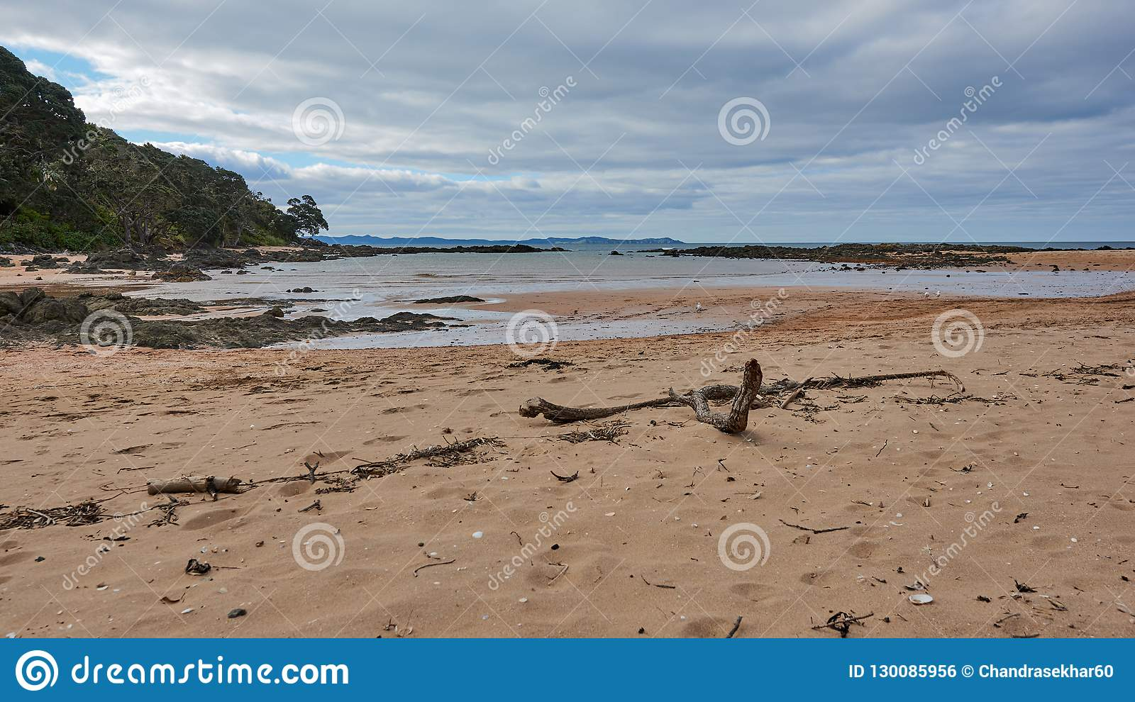 Driftwood στην παραλία στον κόλπο καλωδίων, mangonui Νέα Ζηλανδία