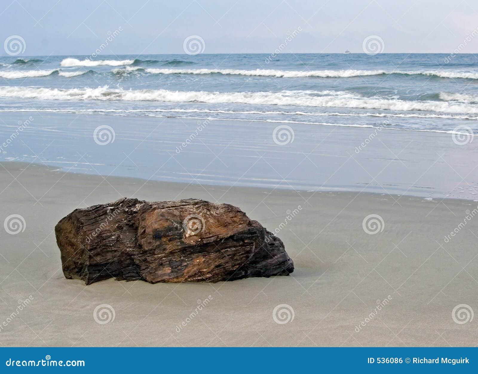 Download Driftwood foto de stock. Imagem de cópia, cinzento, costa - 536086