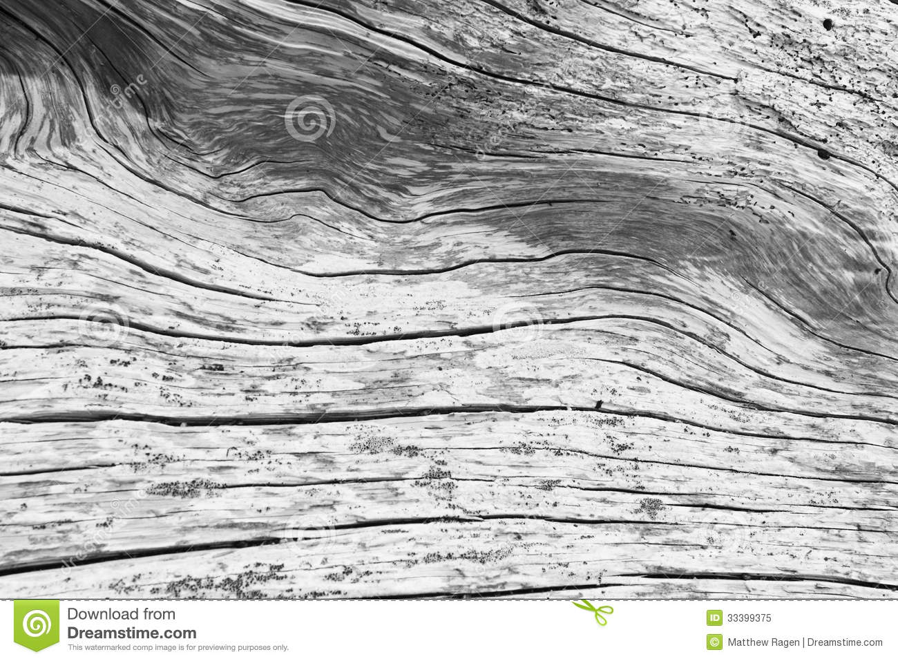 Driftwood Abstract Pattern