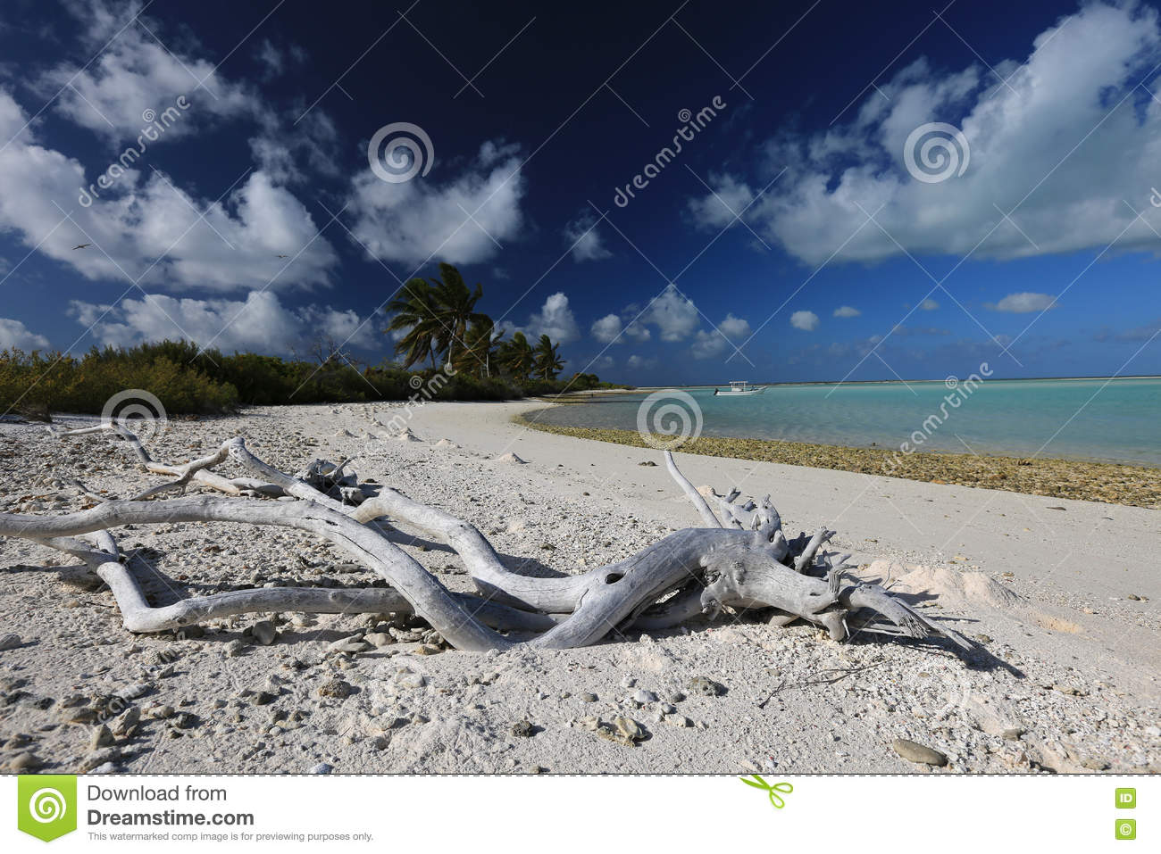 Driftwood On The Beach, Christmas Island, Kiribati Stock Photo ...