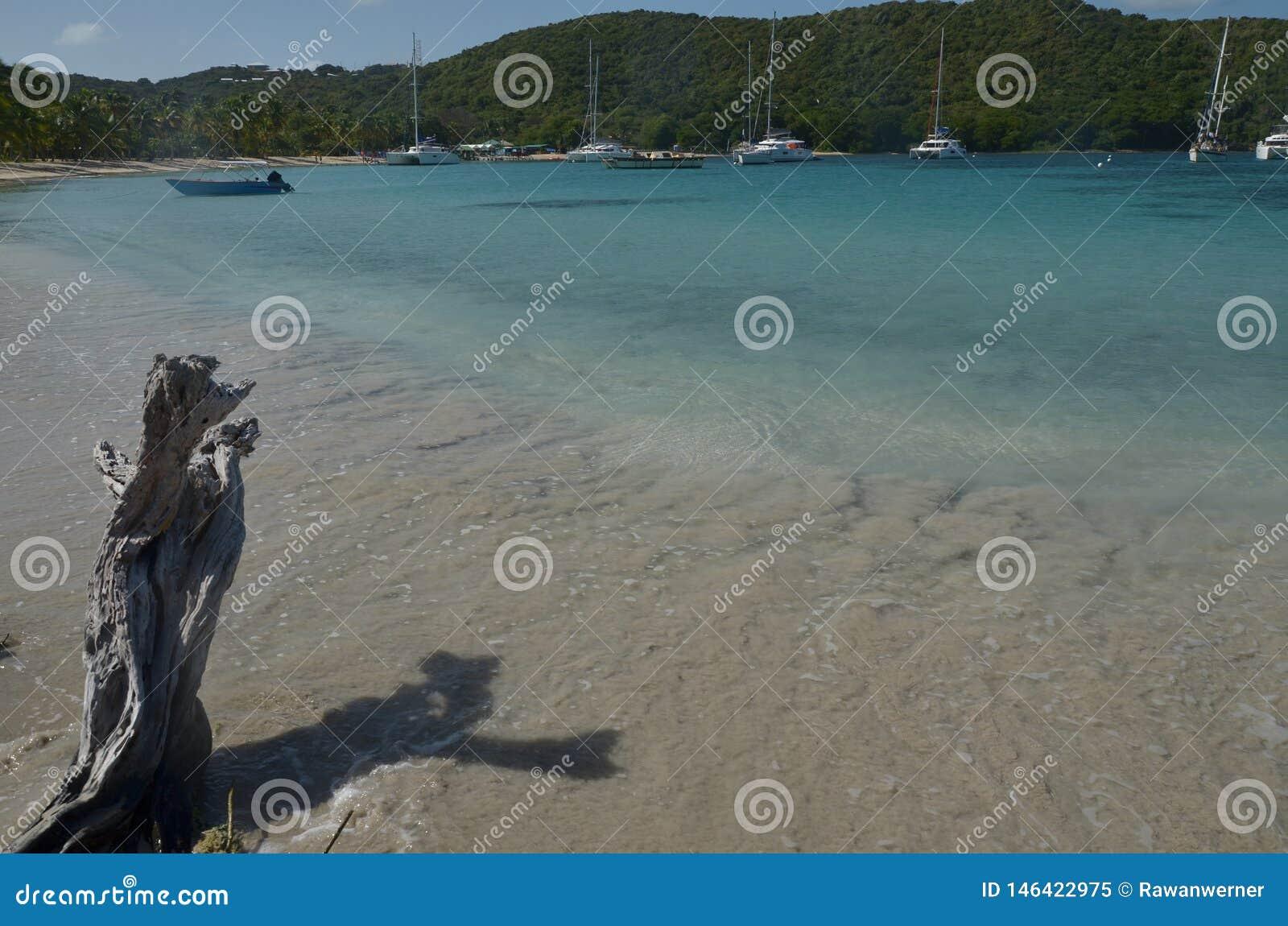 Driftwood Caribbian St Vincent stare Drzewne grenadyny