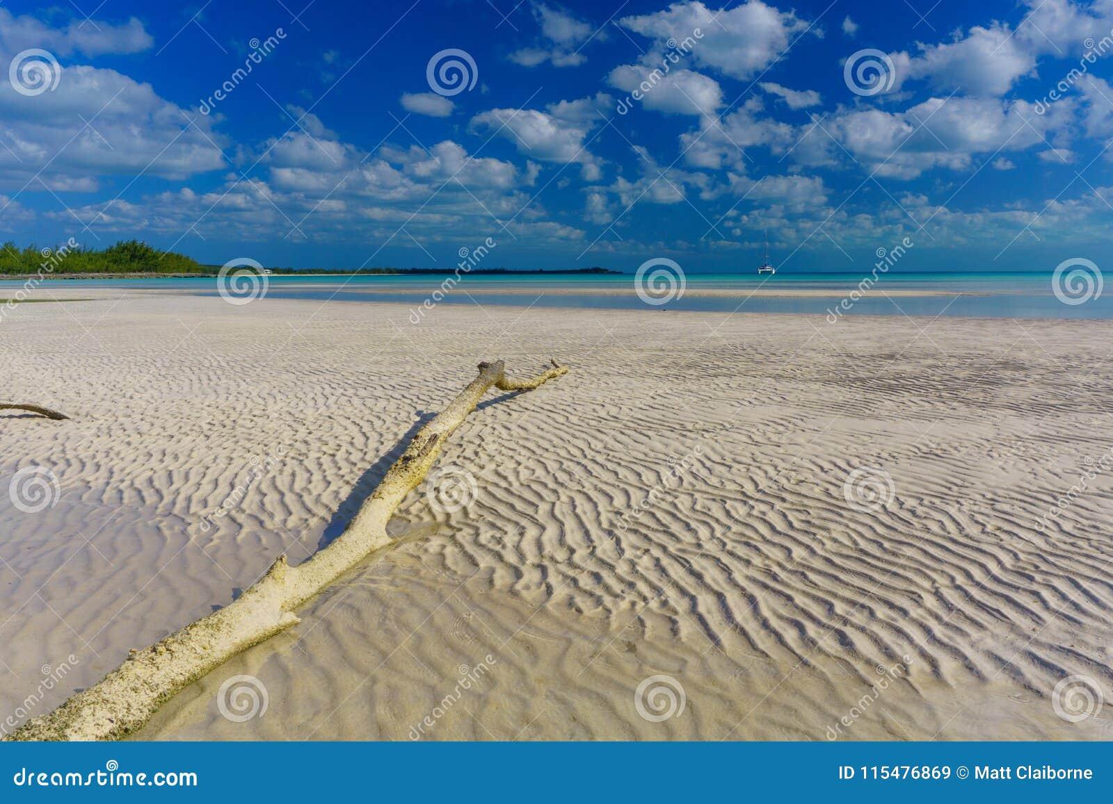 Driftwood i piaska czochry, Tropikalna plaża