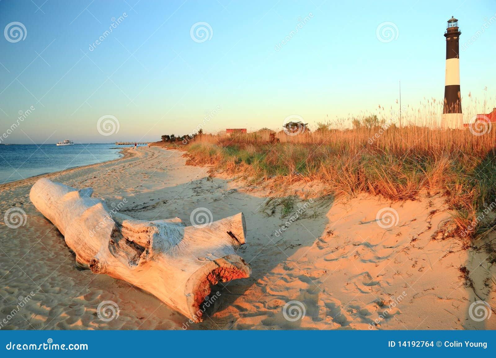 Driftwood on Long Island Sound