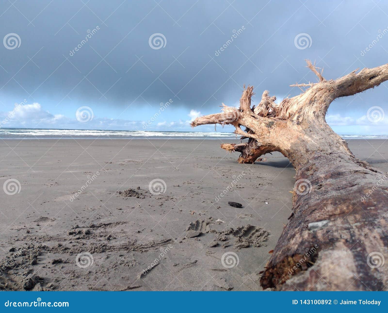 Driftwood på stranden