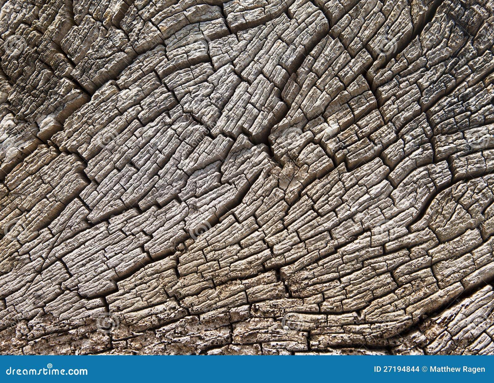 driftwood stump texture stock images