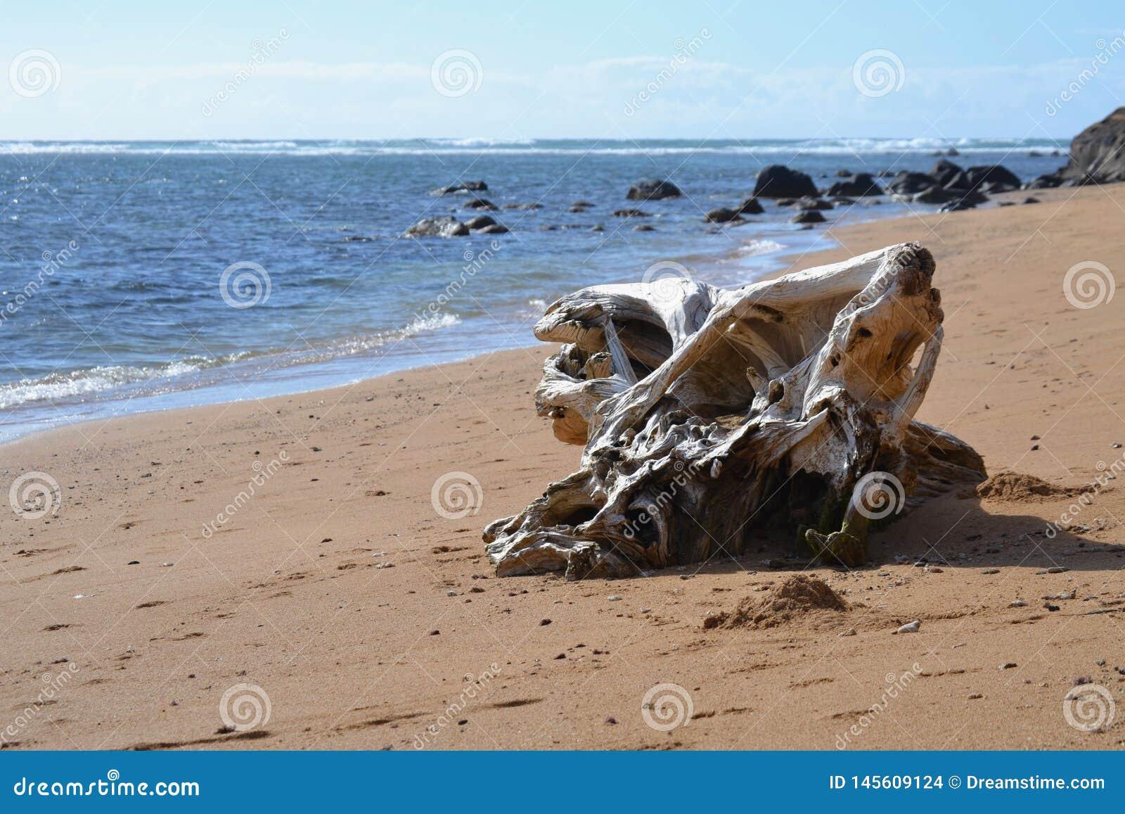 Drijfhout op Kauai
