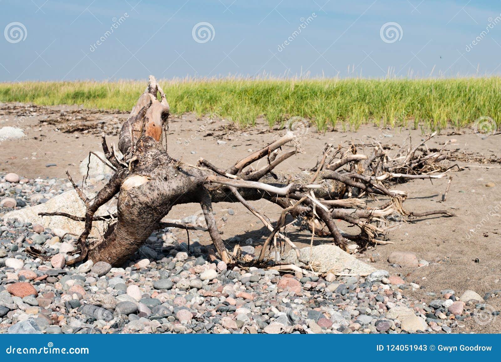 Drijfhout op Strand met rotsen en overzees gras