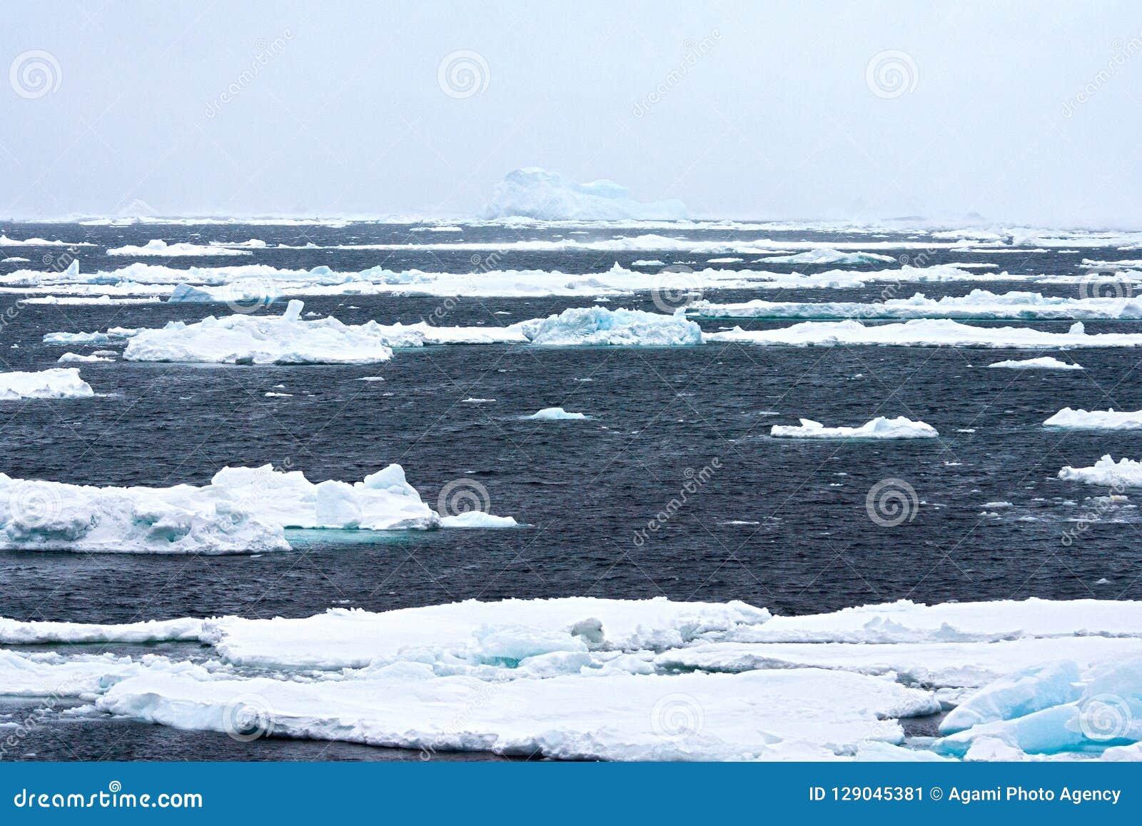 Drijfijs Antartide, ghiaccio galleggiante Antartide