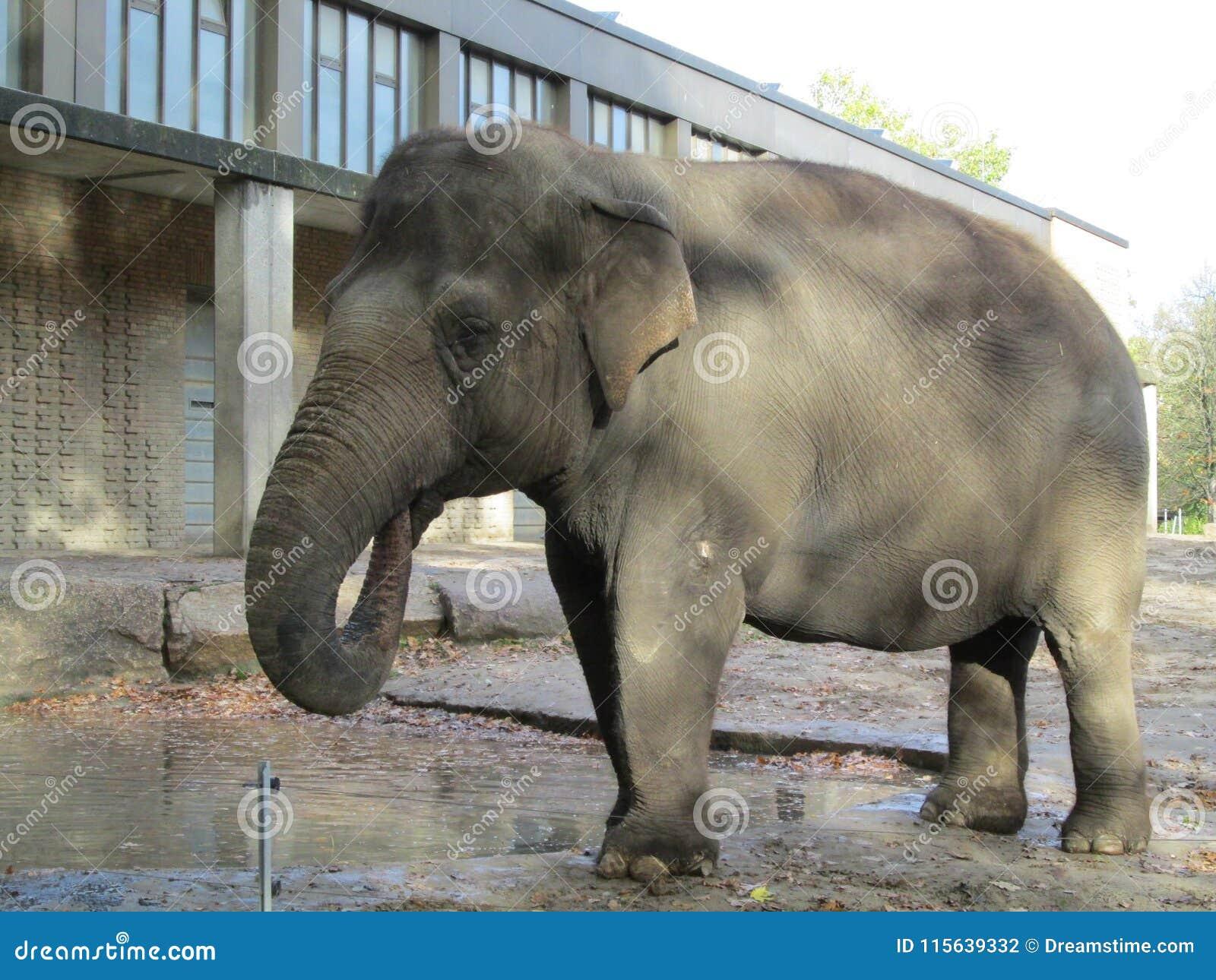 Drinkwater van de Cheerfful het goede olifant
