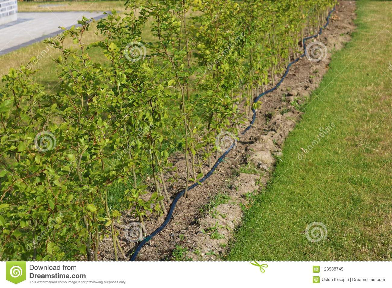 Drip Irrigation Stock Images Download 2 541 Royalty Free
