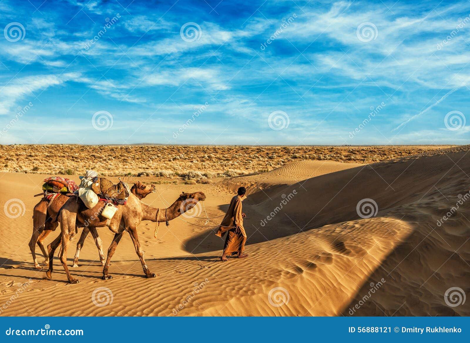 Driver del cammello di Cameleer con i cammelli in dune di Thar