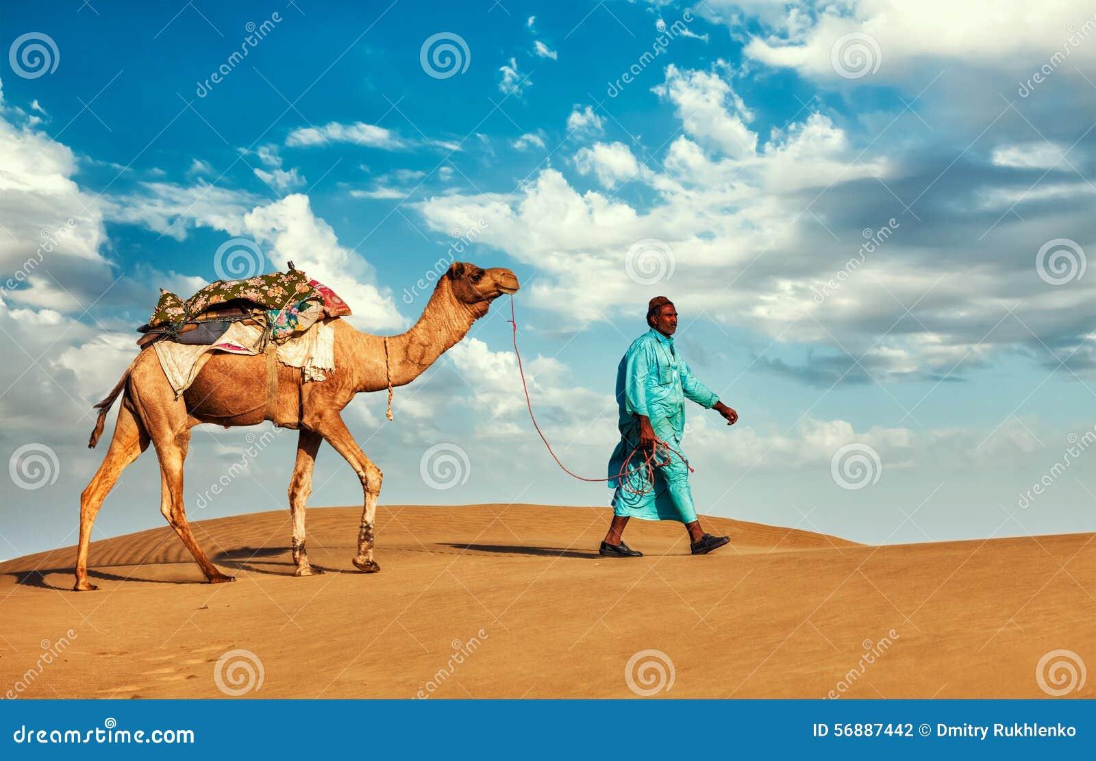 Driver del cammello di Cameleer con i cammelli nel Ragiastan