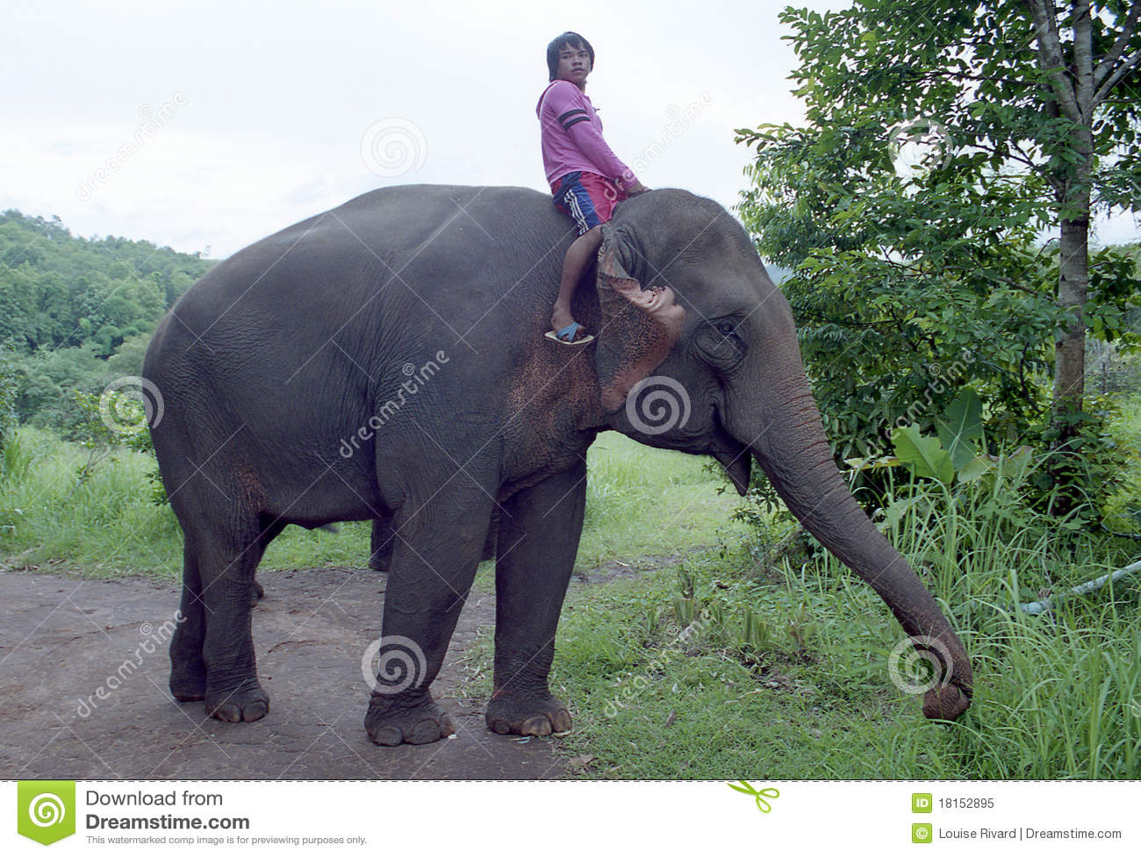 Driver dell 39 elefante immagine editoriale immagine di - Elefante foglio di colore dell elefante ...