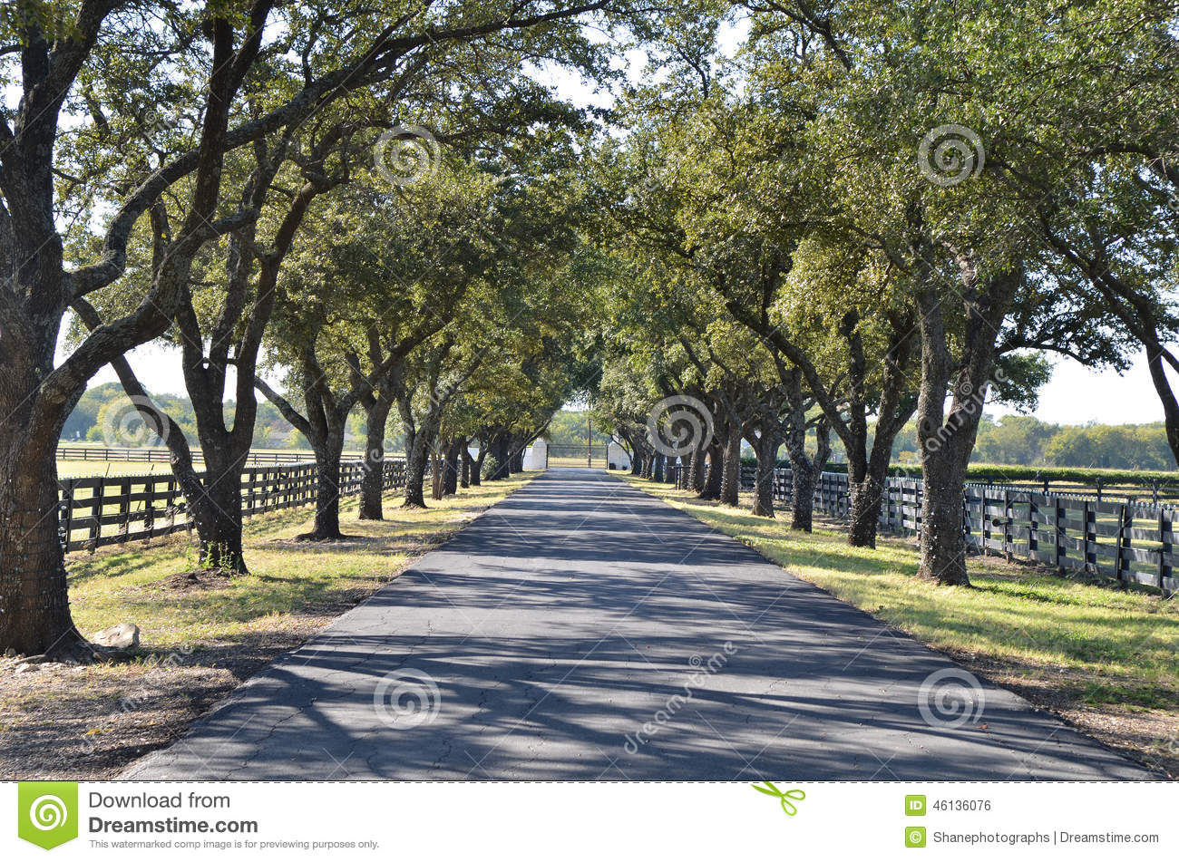 driveway with trees on both sides stock photo image of path dawn