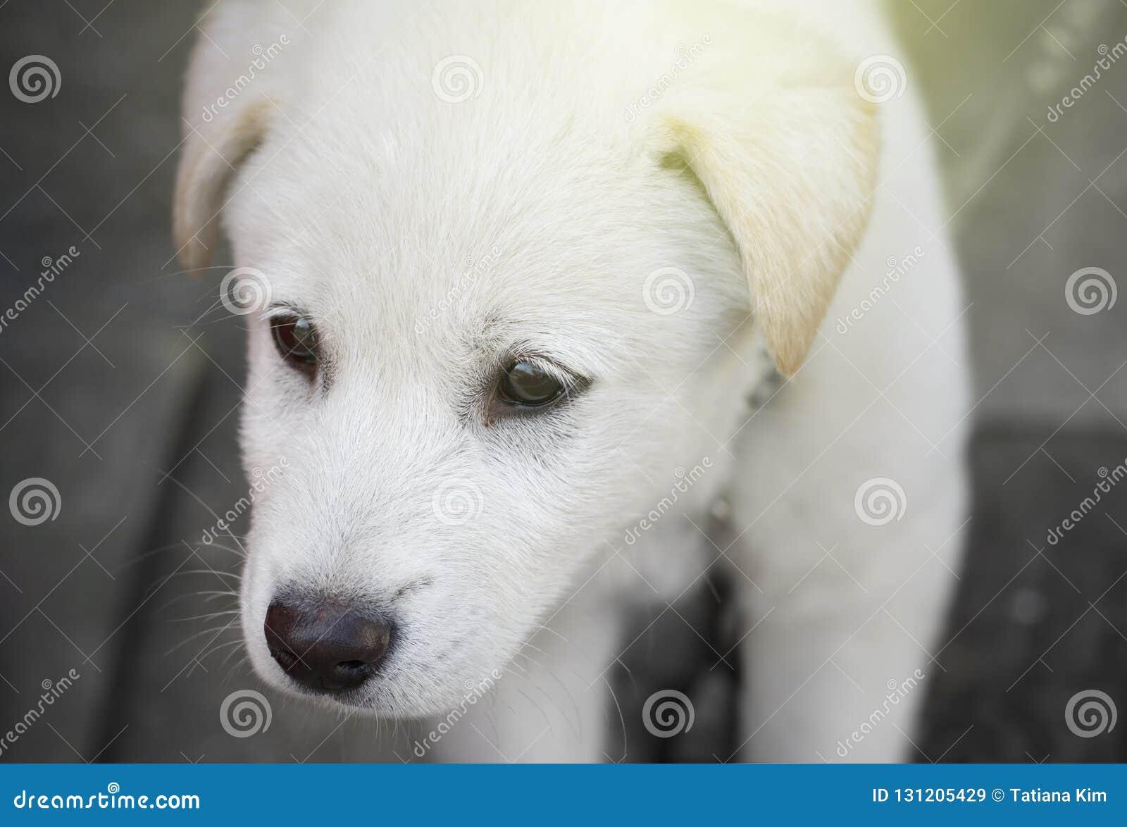 Droevig wit puppyclose-up op de gestemde straat,
