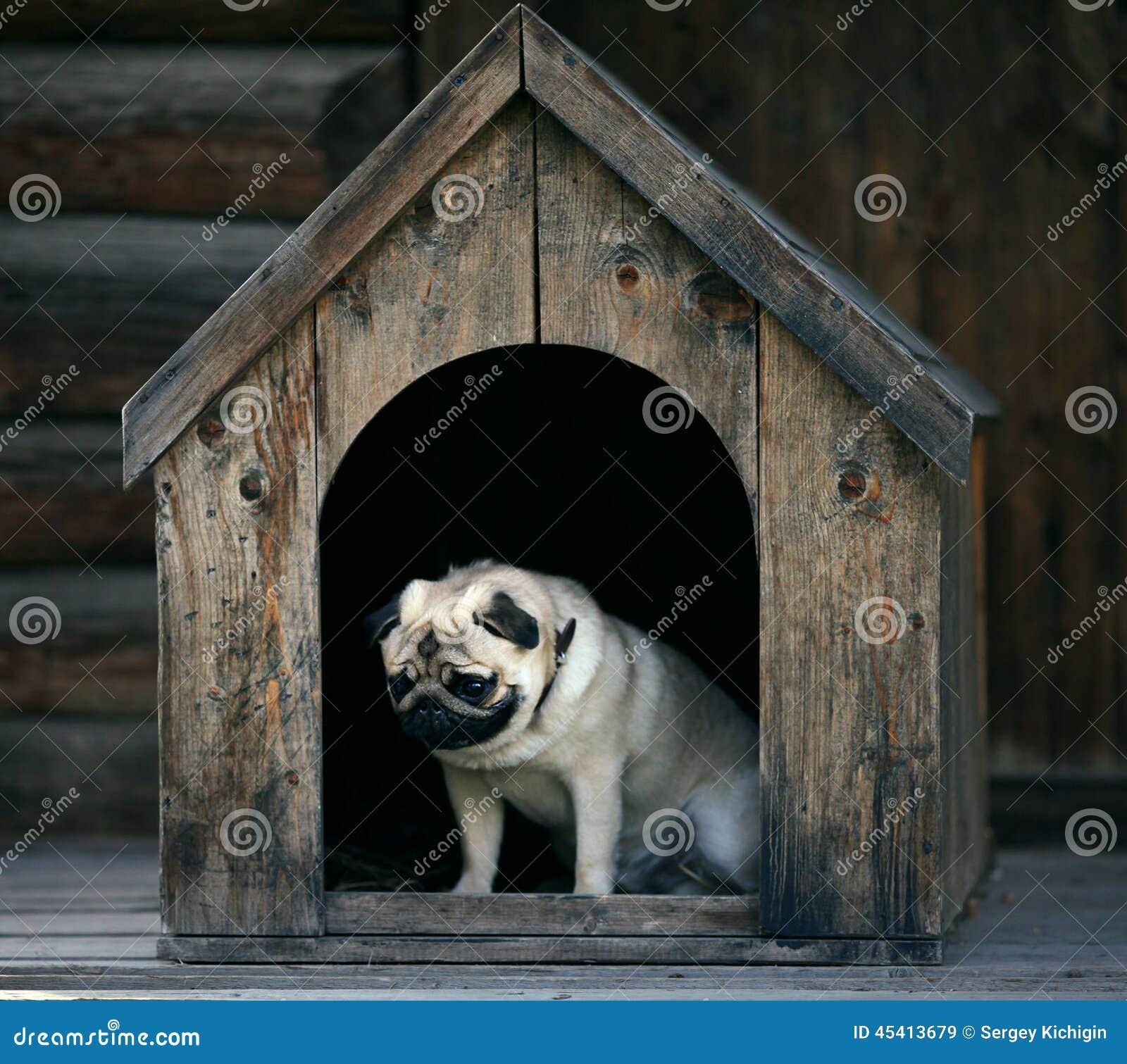 Droevige pug hond in het hondhuis