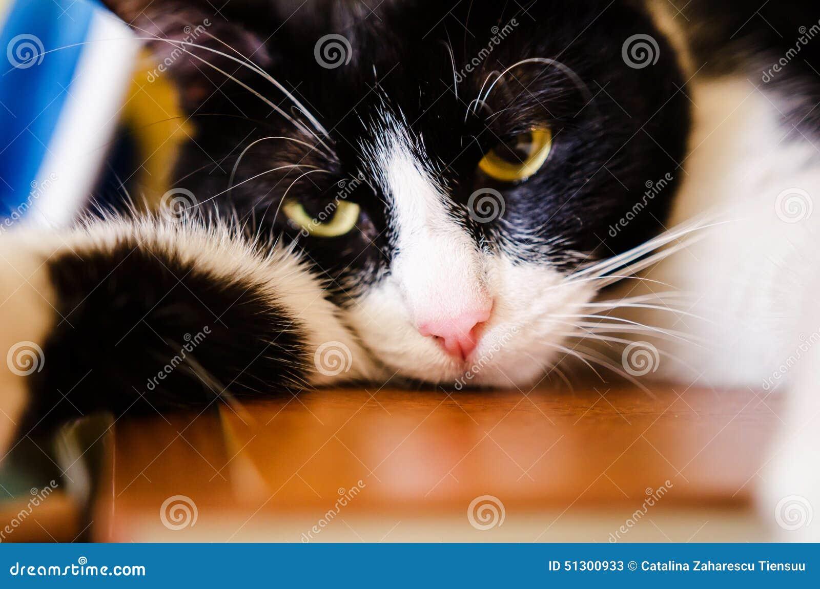 Droevige zwart-witte kat
