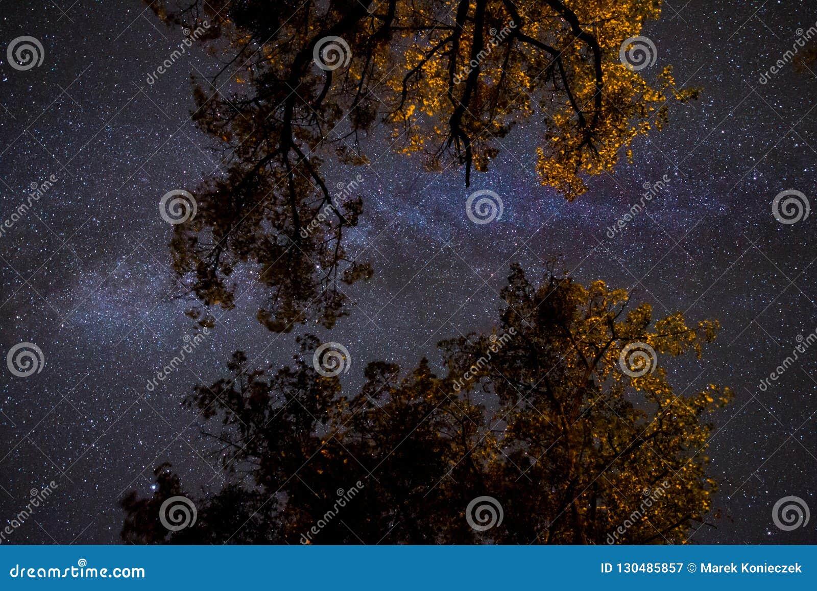 Droga Mleczna nad korona drzewa