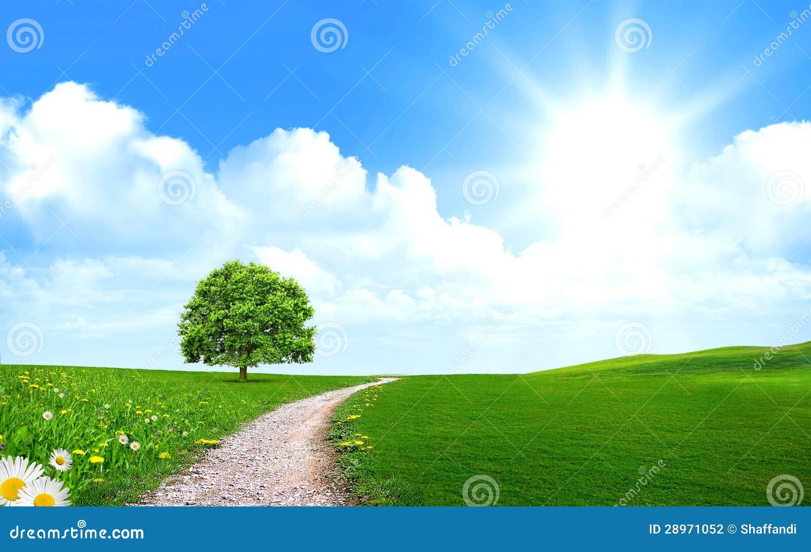 Droga przemian blisko drzewa w zielonym polu