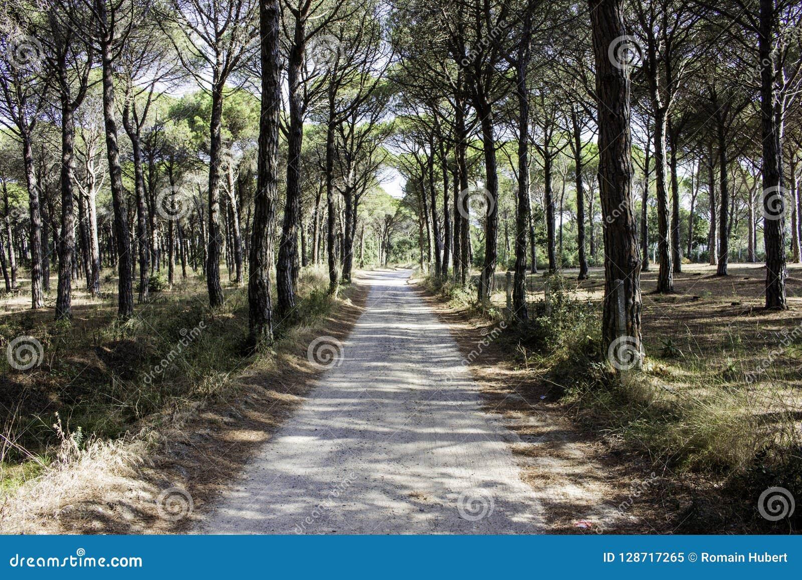 Droga przemian przez śródziemnomorskiego las