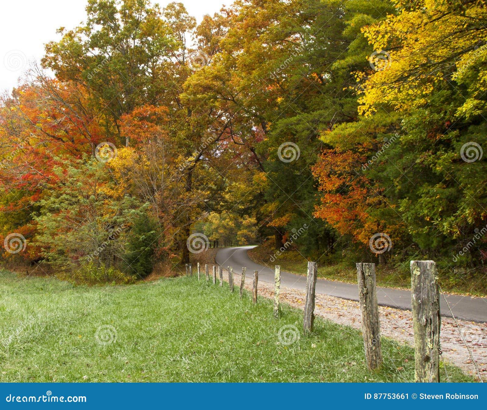 Droga Przez spadków drzew
