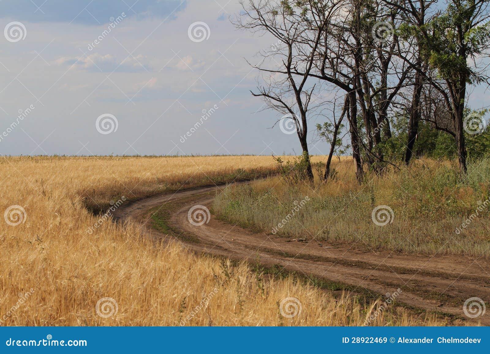 Droga wzdłuż pola