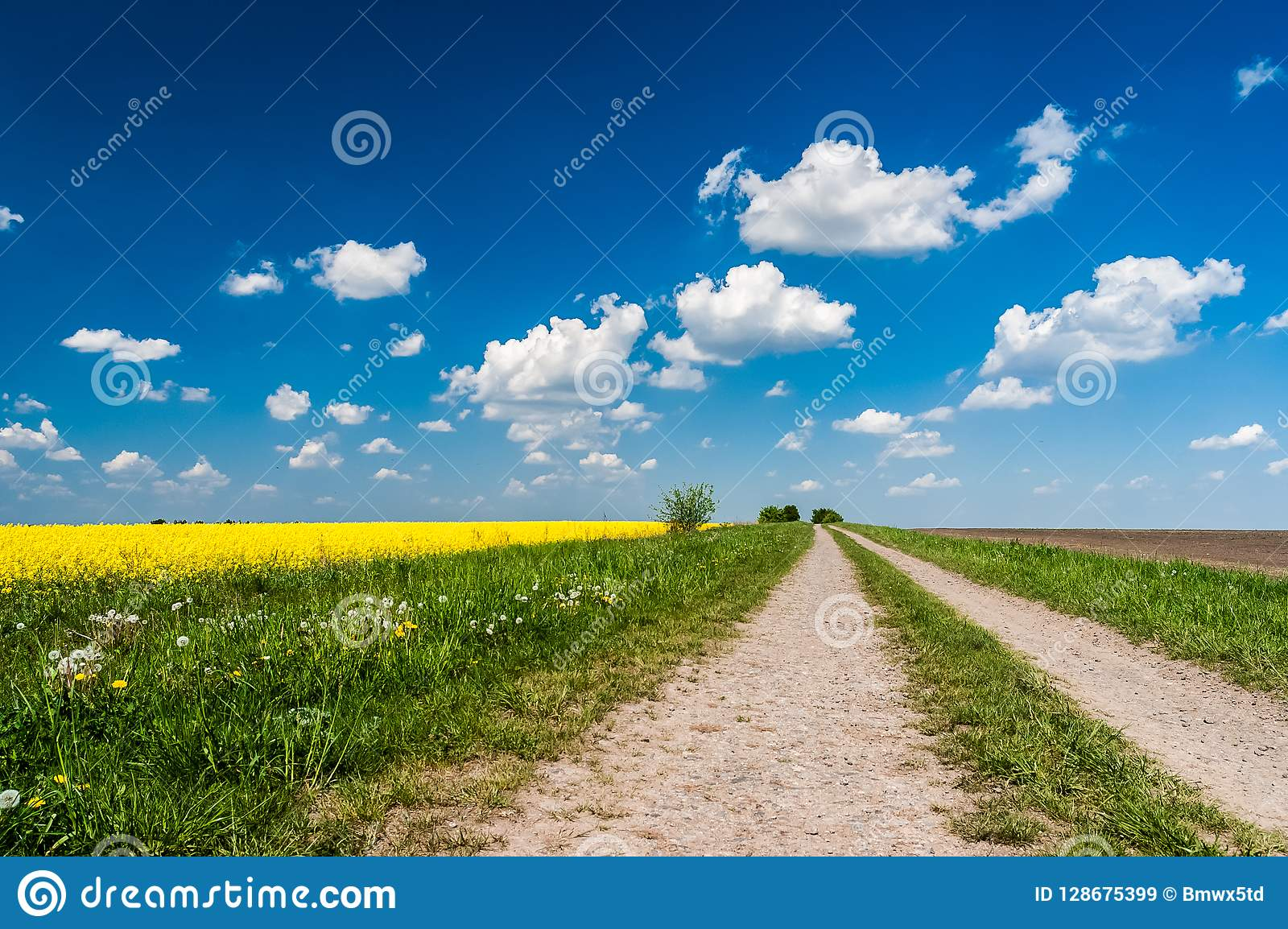 Droga wzdłuż rapeseed pola